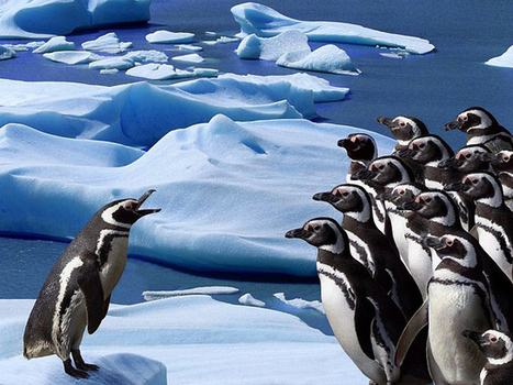 Amazing Photographs of Penguins   Incredible Snaps   All about nature   Scoop.it