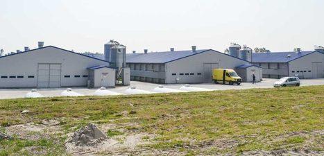 La Pologne, nouveau numéro 1 européen de l'aviculture   Agriculture et Développement   Scoop.it