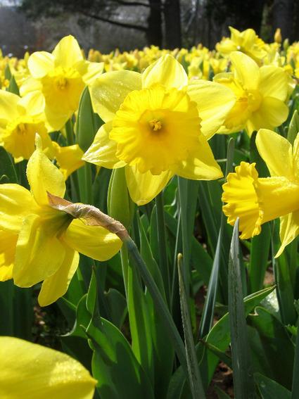Dutch Grown Bulk Flower Bulbs | Flower Bulbs | Scoop.it