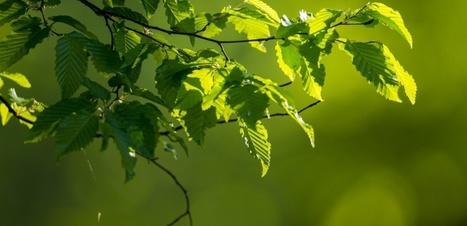 L'éclairage public précipite le printemps et le réveil des arbres | pour mon jardin | Scoop.it