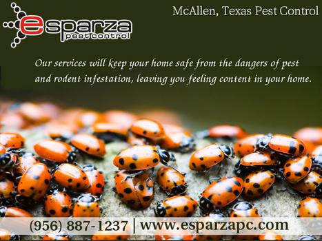 Choosing a Pest Control Provider in Mcallen TX | Esparza Pest Control | Scoop.it