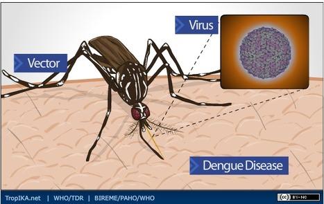 Tropika.net - Dengue Infographic: DENGUE: Excelente Representación Visual del Virus, el vector y la enfermedad | | Salud Publica | Scoop.it