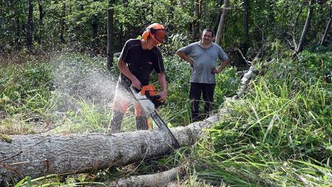 BOULONNAIS - Forêts interdites, frênes malades, que devient le bois des arbres abattus en grand nombre ? | Approvisionnement et Première Transformation | Scoop.it