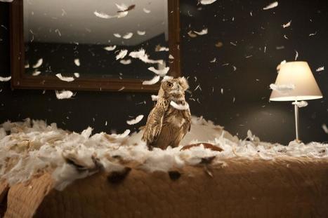 MOCA announces Doug Aitken exhibition for fall | Art Contemporain | Scoop.it