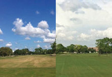 Rid lawn of brown dry areas quickly | Turf Maintenance | Scoop.it
