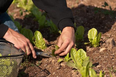 Does Food Tech Help Farmers? | Food Startups | Scoop.it