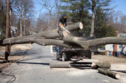 Do You Need a Permit to Remove a Tree in Los Gatos, California?   Bellizzi Tree Service of San Jose   Scoop.it