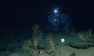 Gulf of Mexico / BP oil spill seriously harmed deep-sea corals, scientists warn | Human Beings and Their War With the Earth | Scoop.it