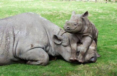 """Don't let them hurt my Mom!"" 