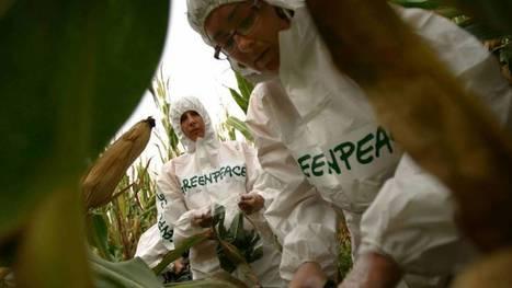109 nobeles contra Greenpeace por los transgénicos | Novedades Cientificas y Médicas | Scoop.it