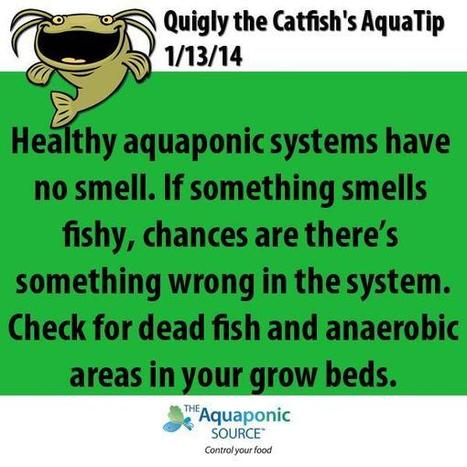 Twitter / aquapon: Tip of the day! #aquaponics ... | Sustainable Agriculture | Scoop.it