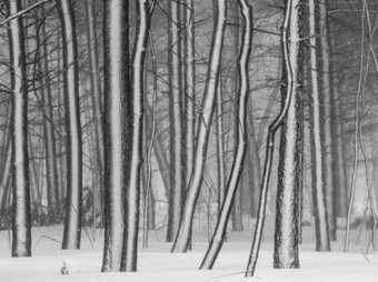 Forest Picture -- Weather Wallpaper -- National Geographic Photo of the Day | Hurtigruten Arctique Antarctique | Scoop.it