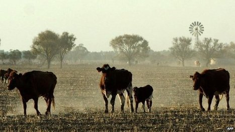 Australia set for China cattle deal | NGOs in Human Rights, Peace and Development | Scoop.it