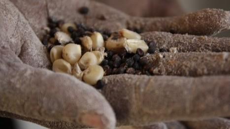 Renforcer la place de la sécurité alimentaire et nutritionnelle dans l ... | Take a look at your lifestyle | Scoop.it