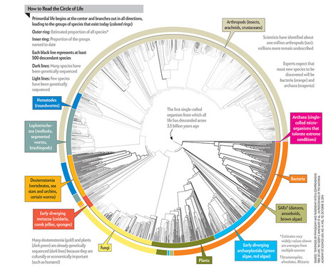All 2.3 Million Species Are Mapped into a Single Circle of Life | Plant Biology Teaching Resources (Higher Education) | Scoop.it