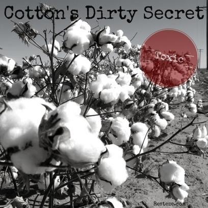 Cotton's Dirty Secret | Health News | Scoop.it