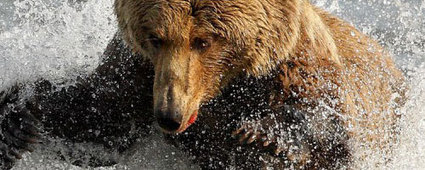 Viaggi in Canada, Grizzly Knight Inlet Lodge   Viaggi The Wilderness Society   Scoop.it