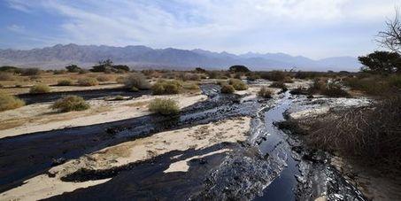 Israël connaît son « plus grand désastre écologique » | RSE et développement durable | Scoop.it