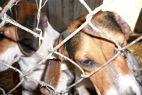 Bills to curb animal abuse advance in Lansing | Michigan Radio | Zoos should not exist | Scoop.it