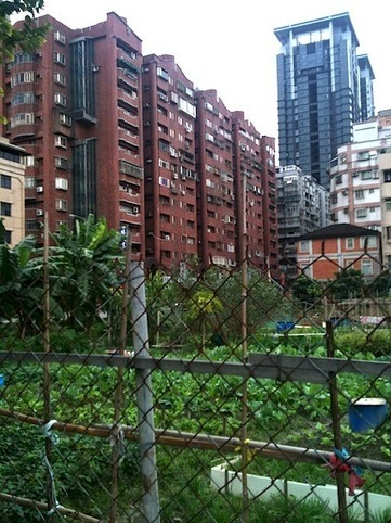 Urban Farming in Taiwan — City Farmer News | Urban Gardening | Scoop.it