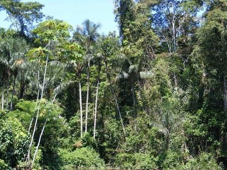 Amazonian_rainforest.JPG (600x450 pixels) | laiskiainen | Scoop.it