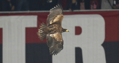 'Dangerous mascot eagle banned from stadium - The Local.fr | Mascots | Scoop.it