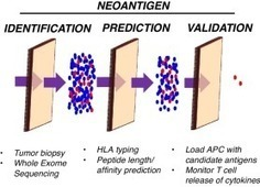 Unmasking targets of antitumor immunity via high-throughput antigen profiling | Immunology and Biotherapies | Scoop.it