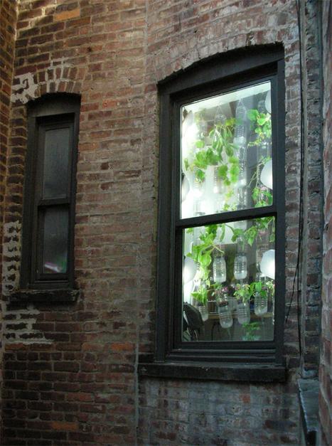 britta riley and rebecca bray: windowfarms | Ébène SOUNDJATA | Scoop.it