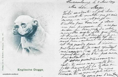 Postkarten mit Hund und Katze | gaidaphotos | Scoop.it