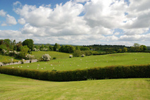 Irish Fields (by sunshine arts) | Diverse Eireann- Sports culture and travel | Scoop.it