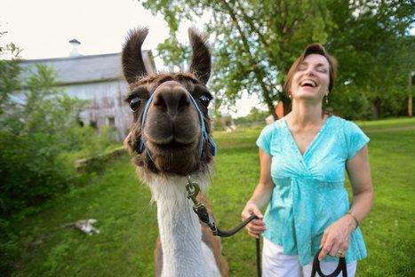 The Llama Is In   Llama Llama Misses Mama   Scoop.it