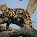 Top 10 Safari Destinations in the World | Wildlife of India | Scoop.it
