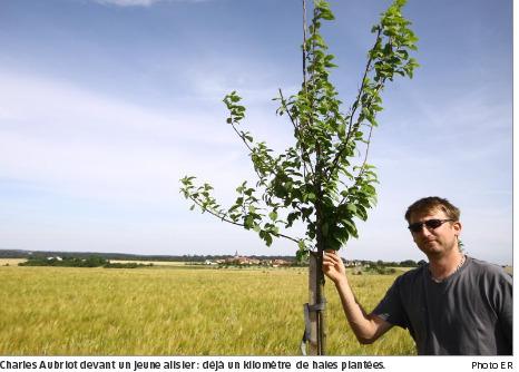 Le retour de la haie | agroforesterie, agroecologie | Scoop.it