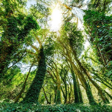 Sustaining sustainability: What institutional investors should do next on ESG | McKinsey & Company | Social Finance Matters (investing and business models for good) | Scoop.it