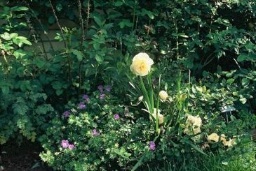 How Soon Can You Prune A Young Rose - Fine Gardening   Annie Haven   Haven Brand   Scoop.it