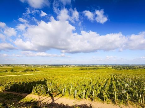 Cru Beaujolais Is the #Wine World's Rising Star | Vitabella Wine Daily Gossip | Scoop.it