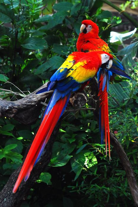 ALLPE : Las once aves con más colorido del mundo | aprendenaturales | Scoop.it
