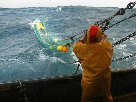 The rich #IrishSea habitat 'is under threat from #overfishing' #Cod #Whiting #Sole ...pls readon   Rescue our Ocean's & it's species from Man's Pollution!   Scoop.it