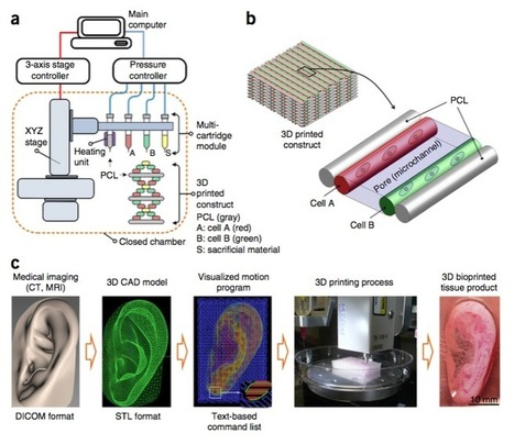 Scientists Just 3D Printed a Transplantable Human Ear | Organ Donation & Transplant Matters Resources | Scoop.it