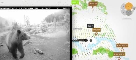 Voorbeeld: Grizzly in kaart en beeld gebracht   Datavisualisatie   Scoop.it
