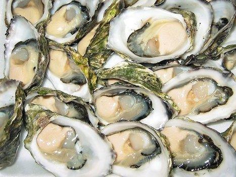 Grants would boost recreational shellfishing | Rhode Island Magazine | Scoop.it