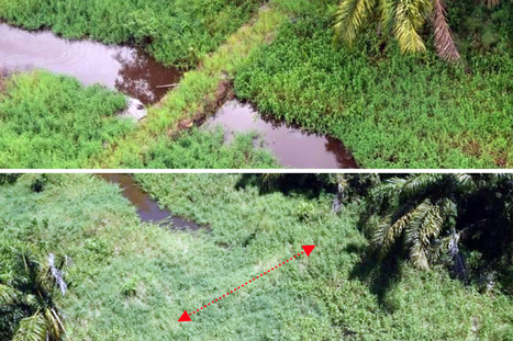 Damaged wetlands recovering along Costa Rica-Nicaragua border Border dispute - The Tico Times | Ecosystems at Risk | Scoop.it