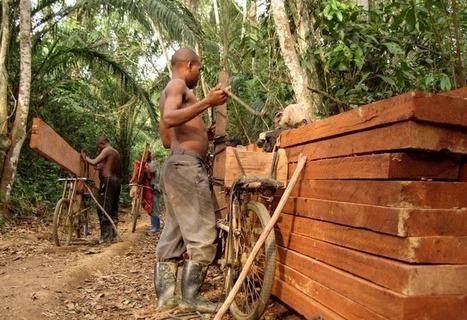 RDC : 1,5 milliards injectés dans le Fonds pour l'économie verte en ... - Le Griot.info   Economie verte   Scoop.it