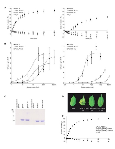 A Conserved Peptide Pattern from a Widespread Microbial Virulence Factor Triggers Pattern-Induced Immunity in Arabidopsis | PlantBioInnovation | Scoop.it