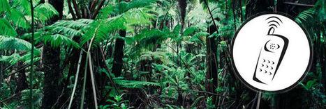 Pour sauver l'Amazonie, les arbres équipés de téléphones portables ! | Economie Responsable et Consommation Collaborative | Scoop.it