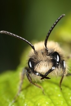 BEE 1 | Conservation & Environment | Scoop.it