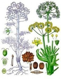 Remedios Naturales Para Colon Irritable | Tratamiento Colon Irritable | Scoop.it