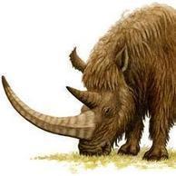 Descubren una cría de mamut en Asturias   4º de ESO. Bloque 3: La evolución de la vida   Scoop.it