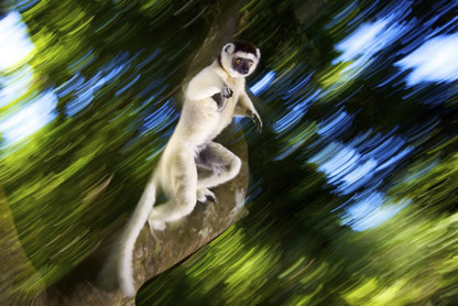Best commended wildlife photos 2012 revealed   Natural History Museum   For the love of Photography   Scoop.it