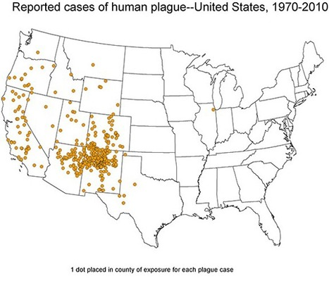 Dog infects humans with plague for first time in U.S. | Medical GIS Guide | Scoop.it